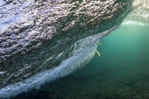 K4 fins underwater 7 by Si Crowther